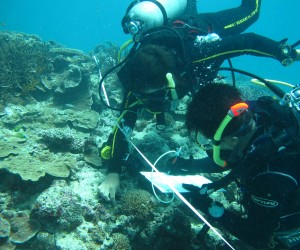 Carlos & Guillermo, Coral-algal surveys